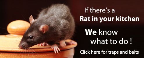 If there's a rat in your kitchen we know what to do!