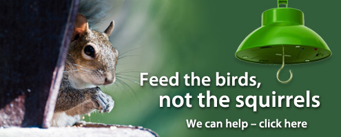 Feed the birds, not the squirrels.  We can help.